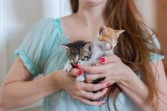 Ciérrese para arriba de dos gatitos lindos en manos del ` s de la mujer imagen de archivo libre de regalías