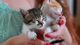 Ciérrese para arriba de dos gatitos lindos en manos del ` s de la mujer almacen de metraje de vídeo