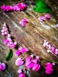 Ciérrese para arriba de enredadera mexicana en la tabla de madera Foto de archivo libre de regalías