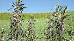 Ciérrese para arriba de flores salvajes en la hierba que sacude con el viento 4K se cierran para arriba almacen de video
