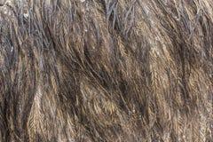 Ciérrese para arriba de fondo de las plumas del emú imagen de archivo