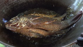 Ciérrese para arriba de freír pescados de la Tilapia en una cacerola con aceite de ebullición almacen de video
