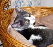 Ciérrese para arriba de gatito Fotografía de archivo