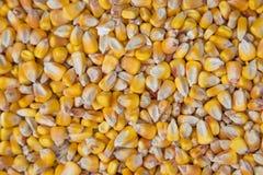Ciérrese para arriba de granos del maíz Fondo entero Fotos de archivo