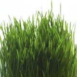 Ciérrese para arriba de hierba Imágenes de archivo libres de regalías