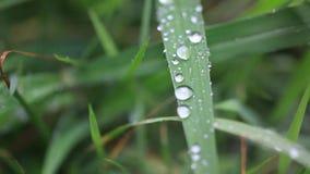 Ciérrese para arriba de hierba con las gotas de lluvia macras HD metrajes