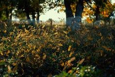 Ciérrese para arriba de hierba retroiluminada imágenes de archivo libres de regalías