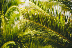Ciérrese para arriba de hojas de palma Fotos de archivo