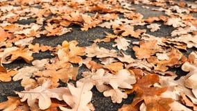 Ciérrese para arriba de hojas en el camino Fotos de archivo libres de regalías