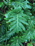 Ciérrese para arriba de hojas en una planta Foto de archivo libre de regalías