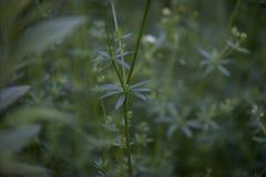 Ciérrese para arriba de hojas verdes minúsculas foto de archivo libre de regalías