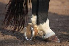 Ciérrese para arriba de hoofs negros del caballo imagenes de archivo