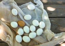 Ciérrese para arriba de huevos en el tamiz, vista superior de huevos en gasa Huevo del pollo Cesta de los huevos de gallina Fotos de archivo