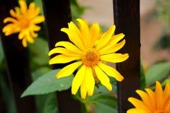 Ciérrese para arriba de imagen de la flor del verano fotos de archivo