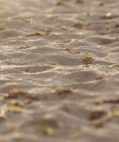Ciérrese para arriba de la arena imagenes de archivo