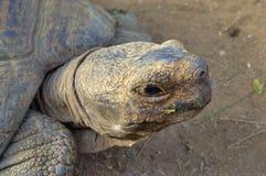 Ciérrese para arriba de la cabeza de la tortuga Imagen de archivo
