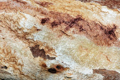 Ciérrese para arriba de la corteza de árbol vieja texturizada Imágenes de archivo libres de regalías