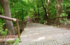 Ciérrese para arriba de la escalera en el bosque o el parque del verano Fotos de archivo