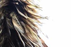 Ciérrese para arriba de la escoba de la pluma en el fondo blanco fotografía de archivo