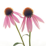 Ciérrese para arriba de la flor Foto de archivo