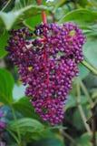 Ciérrese para arriba de la flor Imágenes de archivo libres de regalías