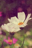 Ciérrese para arriba de la flor blanca del cosmos stock de ilustración