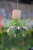 Ciérrese para arriba de la flor de la bromelia Fotos de archivo libres de regalías