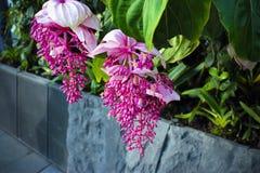 Ciérrese para arriba de la flor del naa de Sakae Imagen de archivo