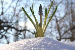 Ciérrese para arriba de la flor del resorte Imágenes de archivo libres de regalías