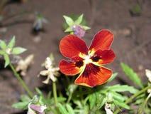 Ciérrese para arriba de la flor roja imagen de archivo libre de regalías