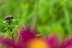 ciérrese para arriba de la flor verde en otoño temprano Fotografía de archivo libre de regalías