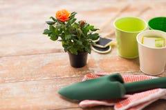 Ciérrese para arriba de la flor y de utensilios de jardinería color de rosa en la tabla Foto de archivo