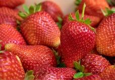 Ciérrese para arriba de la fresa fresca Fotografía de archivo