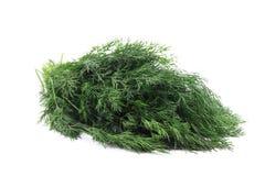 Ciérrese para arriba de la hierba fresca del eneldo Fotos de archivo