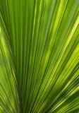 Ciérrese para arriba de la hoja de palma verde para un fondo Imagen de archivo libre de regalías