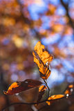 Ciérrese para arriba de la hoja del otoño Fotografía de archivo libre de regalías