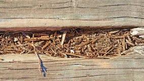 Ciérrese para arriba de la madera de la descomposición a lo largo del paseo marítimo Fotografía de archivo