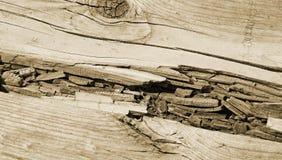 Ciérrese para arriba de la madera descompuesta a lo largo del paseo marítimo - tono de la sepia Fotos de archivo libres de regalías