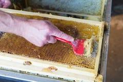 Ciérrese para arriba de la mano humana que extrae la miel del panal Fotografía de archivo libre de regalías