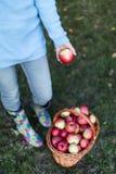 Ciérrese para arriba de la mujer que pone la manzana en cesta Foto de archivo