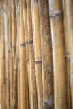 Ciérrese para arriba de la pared hecha de bambú Imagenes de archivo