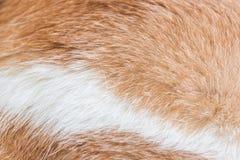Ciérrese para arriba de la piel de un gato imágenes de archivo libres de regalías