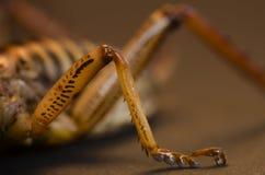 Ciérrese para arriba de la pierna del insecto Foto de archivo