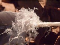 ciérrese para arriba de la pieza con volantes blanca de la pluma en la tierra Foto de archivo