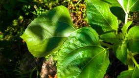 Ciérrese para arriba de la planta con las hojas verdes Imagen de archivo libre de regalías