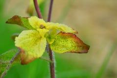 Ciérrese para arriba de la planta de las hojas Fotografía de archivo