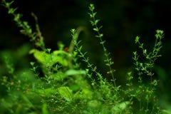 Ciérrese para arriba de la planta minúscula Fotografía de archivo