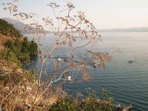 Ciérrese para arriba de la planta secada y del agua hermosa del lago Ohrid, Macedonia Imagen de archivo