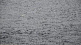 Ciérrese para arriba de la precipitación de las ondas del río del invierno almacen de metraje de vídeo