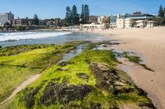 Ciérrese para arriba de la roca cubierta con alga marina con la playa de Cronulla en el fondo fotos de archivo libres de regalías